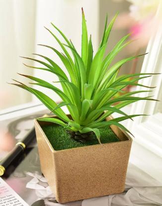 Plante de bureau