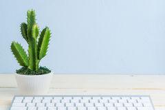 Plante cactus pour bureau